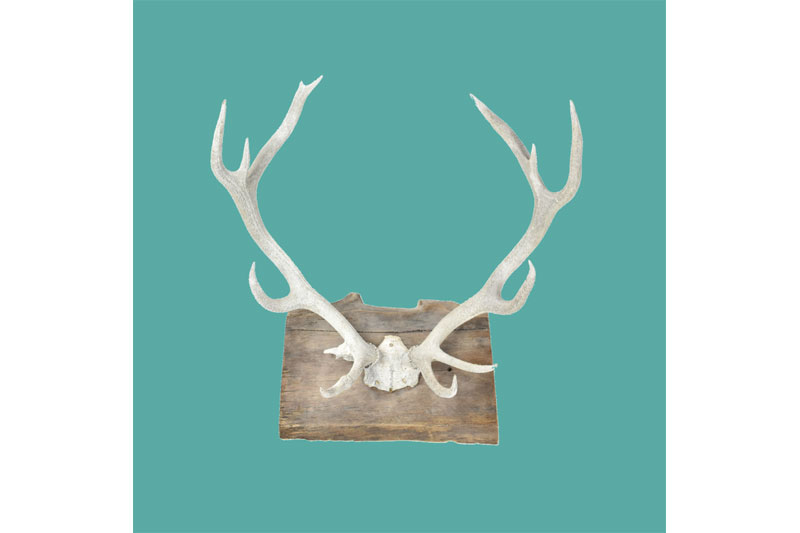 Rutsic vintage boho deer antlers for wedding decorations.