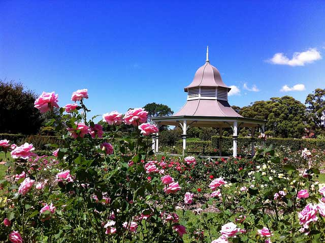 Rose garden and gazebo at Wollongong Botanic Garden. Photography by Alexandra G @ Flickr